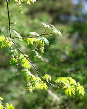 20130403_9999_17.web.leaves